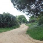 camino limpio,  bien delimitado y en estado natural.